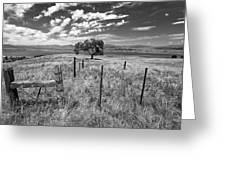 Don't Fence Me In - Black And White Greeting Card
