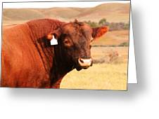 Dont Mess With The Bull Greeting Card