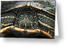 Don't Rock My House - Turtle Greeting Card