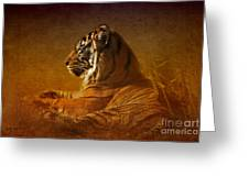 Don't Wake A Sleeping Tiger Greeting Card