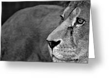 Don't Wake The Lion Greeting Card