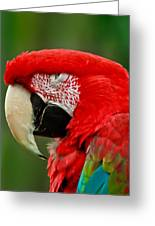Dont You Dare To Stare Macaw Greeting Card