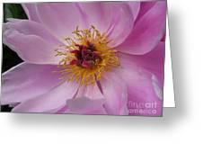 Doreen Greeting Card