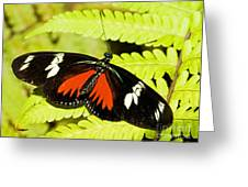 Doris Longwing Butterfly Greeting Card