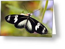 Doris Longwing Butterfly Greeting Card