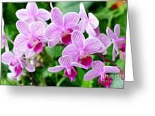 Doritaenopsis Flower Greeting Card
