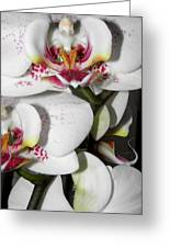 Dots And Splashes Of Pink On Orchid Greeting Card by Kim Galluzzo Wozniak