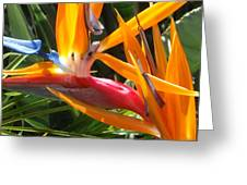 Double Bird Of Paradise - 1 Greeting Card