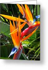 Double Bird Of Paradise - 2 Greeting Card