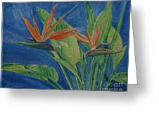 Double Bird Of Paradise Greeting Card