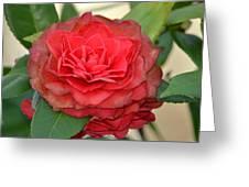 Double Blossom Camelias Greeting Card
