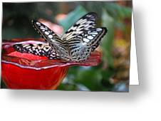 Double Butterfly Greeting Card