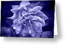 Double Columbine In Blue Greeting Card