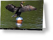 Double Crested Cormorant Greeting Card