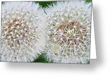 Double Dandelion Wishes Greeting Card