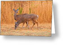 Double Does Greeting Card