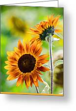 Double Dose Of Sunshine Greeting Card