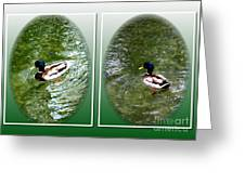 Double Duck Greeting Card