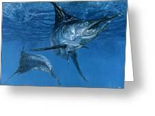 Double Header Makaira Nigricans, Blue Greeting Card