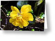 Double Hibiscus Costa Rica Greeting Card