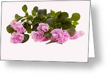 Double Impatiens Greeting Card