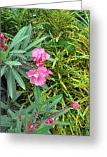 Double Oleander Greeting Card
