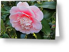 Double Pink Camilla Flower Greeting Card