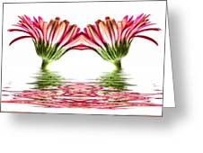 Double Pink Gerbera Flood Greeting Card