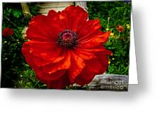 Double Poppy Greeting Card