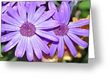 Double Purple Greeting Card