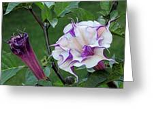Double Purple Datura 6 Greeting Card
