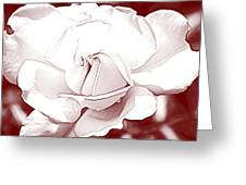 Double Rose Sweet Greeting Card