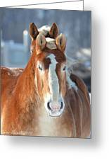 Double Stare Greeting Card