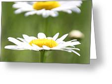 Double Take Color Greeting Card