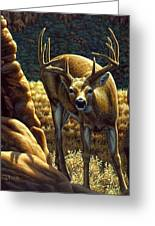 Whitetail Buck - Double Take Greeting Card by Crista Forest