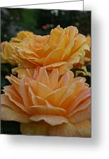 Double Trouble In Bloom Greeting Card