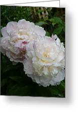 Double White  Peony Greeting Card