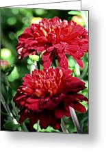 Doubled Red Mums Greeting Card