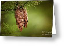 Douglas Fir Cones Greeting Card