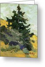 Douglas Fir In Washington Greeting Card