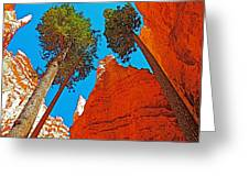 Douglas Firs On Wall Street On Navajo Trail In Bryce Canyon National Park-utah Greeting Card