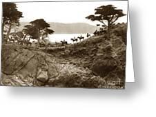 Douglas School For Girls At Lone Cypress Tree Pebble Beach 1932 Greeting Card