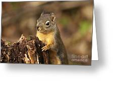 Douglas Squirrel On Stump Greeting Card