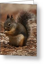 Douglas's Squirrel Greeting Card