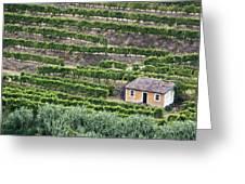 Douro Valley Vineyards Greeting Card