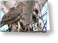 Dove On A Tree Greeting Card