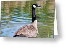 Down Around The Pond Greeting Card