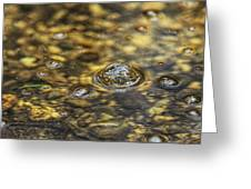 Down By The Bubbling Spring Greeting Card