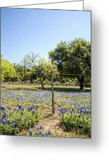 Down Country Bluebonnets Greeting Card
