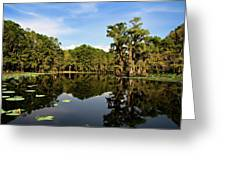 Down In The Bayou Greeting Card